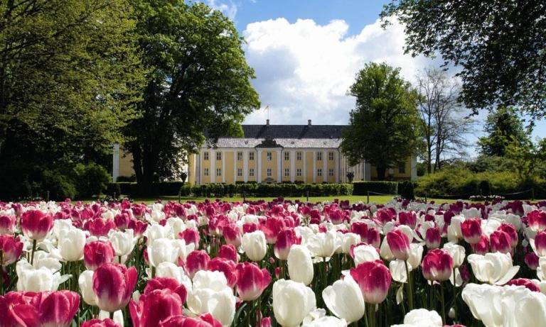 Danmarks største tulipan festival